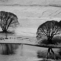 черно-белая зима :: Евгения Кирильченко