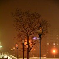 Тишина январской ночи... :: Виктор Бусель