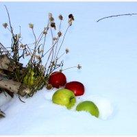 Яблоки на снегу, яблоки на снегу :: юрий