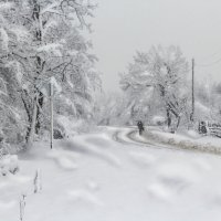 Снежная картина :: Елена Васильева