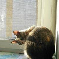 Сидит кошка на окошке.. :: Татьяна