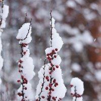 Красное на белом :: Александр Сидоров