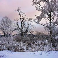 зимнее утро :: Elena Wymann