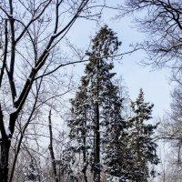 Зимний лес :: Татьяна Колганова