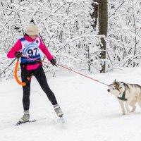 Хозяйка, ты чо, куда бежать??? Не-не-не, давай-ка неспешно прогуляемся по этой зимней красоте! :: Владимир Клещёв