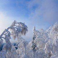 Графика зимы :: Светлана Игнатьева