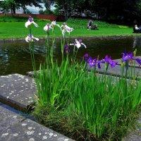 Парк цветов в Гамбурге (серия). Отдыхающие у воды :: Nina Yudicheva