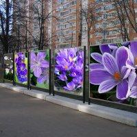 В ожидании весны :: Nina Yudicheva