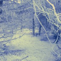 Зимняя сказка :: mAri