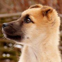 щенок 3 :: Александр Прокудин