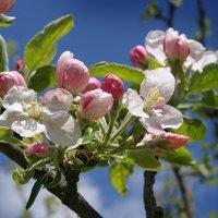 Весна :: Ирина Лядова