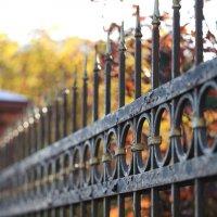 За решеткой осень. :: юрий