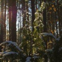 Зимой тоже солнце светит :: Валерий Чернов