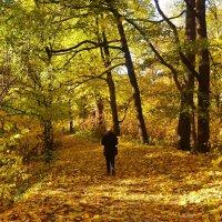 Аллея в Золотую осень... :: Sergey Gordoff