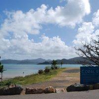 На острове Гамильтон. Австралия. :: Лара Гамильтон