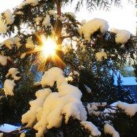 Зима, мороз... :: Николай Щеглов