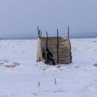 Зимняя рыбалка на Амуре! :: Ирина Антоновна