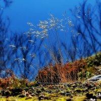 Осень :: вадим измайлов