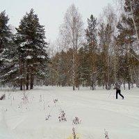Смешанный лес . Зима. :: Мила Бовкун