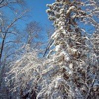 Зимняя :: Сергей Тарабара