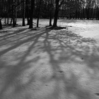 В тени :: Сергей Тарабара