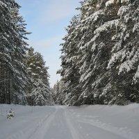 Зимняя дорога :: Лена L.