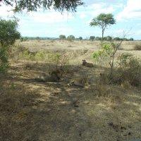 Сафари в Танзании :: Люсия