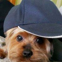 Привет! У меня крутая кепка..! -)) :: Вера (makivera)