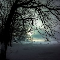 Деревья и облака. :: Franky Fraker