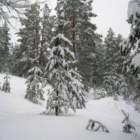 Заснеженный лес :: Юрий Колчин