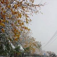 Такого снегопада.. :: Наталья Золотых-Сибирская