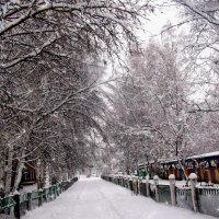 Зима :: Наталья Петровна Власова