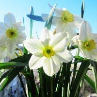 Немного весны :: татьяна