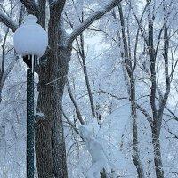 Как белоснежное виденье в укромном парка уголке.. :: Ирина Сивовол