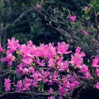Нагоя ботанический сад Higashiyama :: Swetlana V