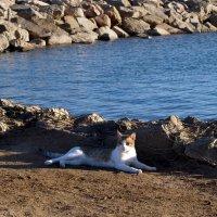 Морской котик :: Татьяна [Sumtime]