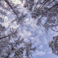 winter patterns :: Dmitry Ozersky