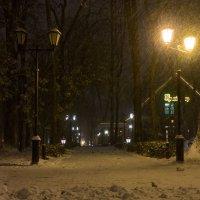 Первый снег :: Олег Козлов
