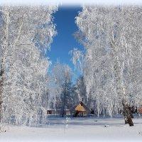 Под ажурными ветвями. :: Наталья Юрова