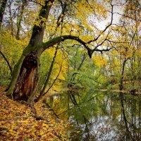 В заповедных и дремучих, страшных Муромских лесах... :: Юрий Кольцов