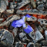 цветок :: Павел Оганезов