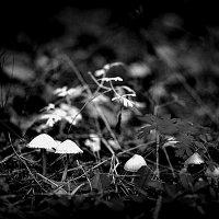 Лес в черно-белом :: Sony 2 Sony 2