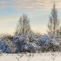 Яблоневый сад в январе :: Милешкин Владимир Алексеевич