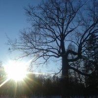 Зимнее солнце :: Сапсан