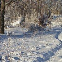 Тропинка в зимнюю сказку . :: Святец Вячеслав