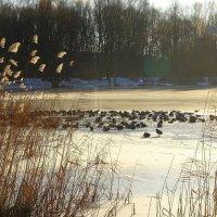 Озеро замёрзло :: Маргарита Батырева