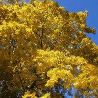 Желтый клен :: mAri