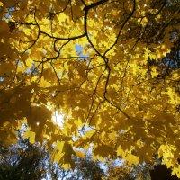 Золото листвы :: mAri