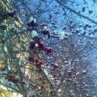 Зимняя рябина в городе растёт :: Виктор Мухин