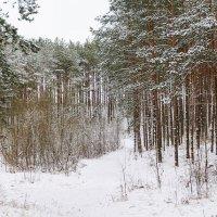 Зимняя панорама :: Анатолий Клепешнёв
